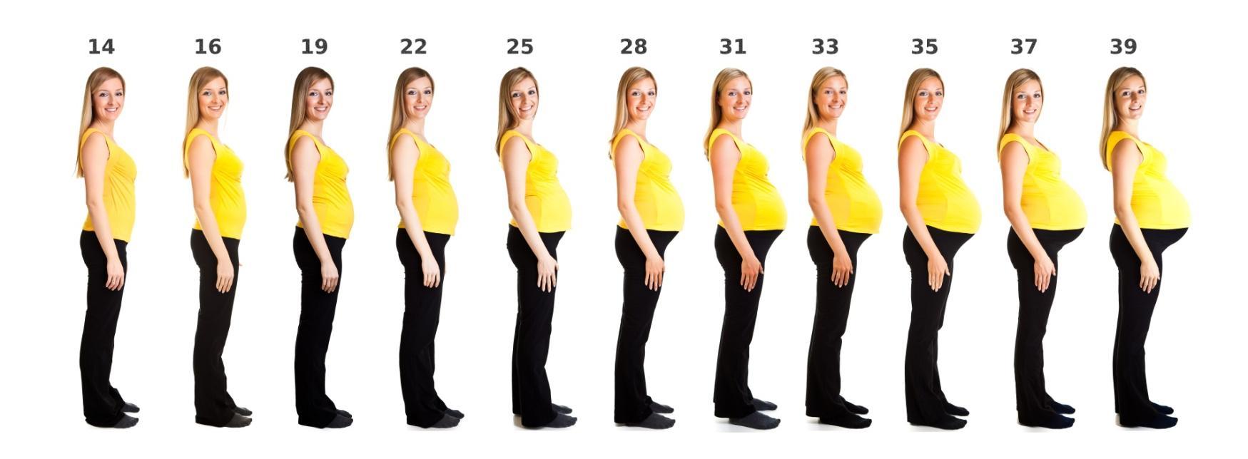 Подсчитываем срок беременности вместе!   Mamaplus 5c888ad6819
