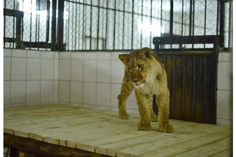 cautand gradina zoologica)
